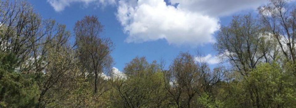 BuddingTrees.jpg